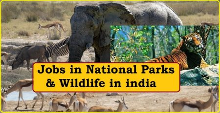 Jobs in National Parks and Wildlife in india